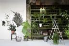Sprzedam rozpoznawalną markę florystyczną z bazą klientów indywidualnych i biznesowych
