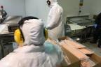 Import mrożonego łososia z Chile