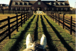 Szukam miłośników koni i wsparcia w budowie ośrodka jeździeckiego