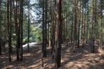 Teren 31h pod inwestycję wraz z jeziorem i lasem w Żarowie koło Wrocławia