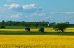 Gospopodarstwo rolne - dom, zabudowania + 40 ha rolna + staw + las