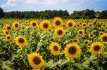 Gospospodarstwo rolne - dom, zabudowania + 40 ha rolna + staw + las