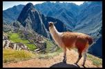 Kuchnia peruwiańska - szukam inwestora do super projektu