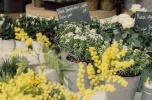 Kwiaciarnia w centrum Poznania, tuż przy Starym Rynku