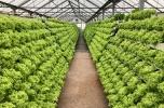 Poszukujemy inwestorów do budowy farm akwaponicznych