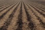 Produkcja warzyw - duże zyski - szukam inwestorów