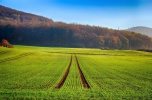 Rolnictwo Rosja, Kaliningrad