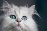 Sklep internetowy dla zwierząt