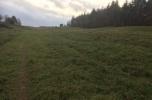 Sprzedam 3 hektary z decyzją środowiskową na budowę kurników na 1,3 mln brojlerów rocznie