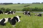Szukam wspólnika - gospodarstwo rolne 350 krów dojnych