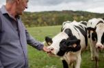Zainwestuj w rolnictwo - produkcja mleka, stopa zwrotu 12% w skali roku.