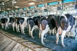 Zainwestuj w rolnictwo - produkcja mleka, stopa zwrotu 15% w skali roku